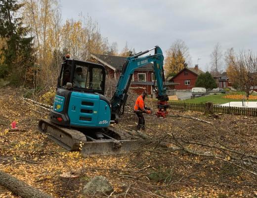 Trädfällning-och-tomtplanering-IMG_0224
